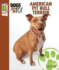 American Pit Bull Terrier (h�ftad)