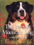 The Bernese Mountain Dog - A Dog of Destiny