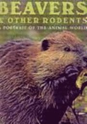 Beavers and Other Rodents (inbunden)
