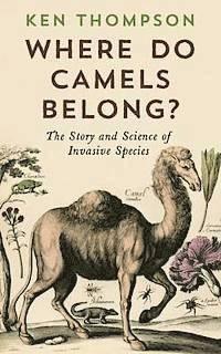 Where Do Camels Belong? (inbunden)