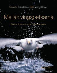 Mellan vingspetsarna : bilder ur f�glarnas liv - fr�n �land till Antarktis (inbunden)