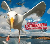 Konsten att fotografera f�glar och andra djur (inbunden)