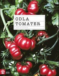 Odla tomater (h�ftad)