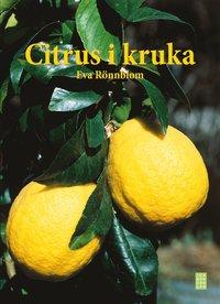 Citrus i kruka (inbunden)