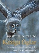 Kaxiga fåglar : personligheter och relationer i fågelvärlden (inbunden)