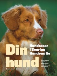 Din hund : hundraser i Sverige - hundens liv (kartonnage)