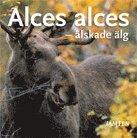 Alces alces : älskade älg