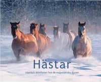 H�star : uppt�ck sk�nheten hos de majest�tiska djuren (inbunden)