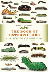 The Book of Caterpillars: A Life-Size Guide to Six Hundred Species from Around the World (inbunden)