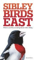 The Sibley Field Guide to Birds of Eastern North America (inbunden)