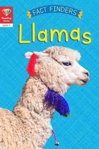 Reading Gems Fact Finders: Llamas (Level 1) (häftad)