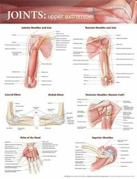 Joints of the Upper Extremities Anatomical Chart (inbunden)