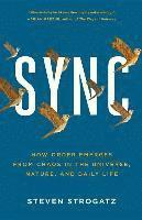Sync: How Order Emerges from Chaos in the Universe, Nature, and Daily Life (häftad)
