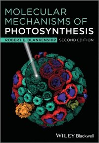 Molecular Mechanisms of Photosynthesis (e-bok)