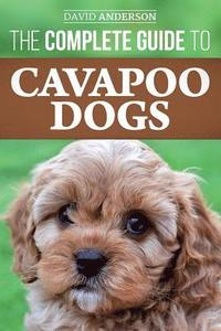 The Complete Guide to Cavapoo Dogs: Everything you need to know to successfully raise and train your new Cavapoo puppy (häftad)