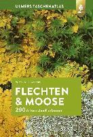 Düll Taschenlexikon der Mittelmeerflora Ruprecht