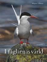 Skopia.it I fåglarnas värld Image
