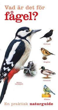 Radiodeltauno.it Vad är det för fågel? Image