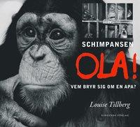 Tortedellemiebrame.it Schimpansen Ola : vem bryr sig om en apa? Image