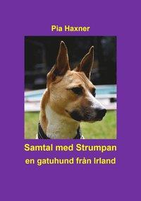 Tortedellemiebrame.it Samtal med Strumpan : en gatuhund från Irland Image