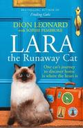 Lara The Runaway Cat