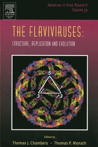 Flaviviruses: Structure, Replication and Evolution