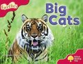 Oxford Reading Tree: Level 4: More Fireflies A: Big Cats