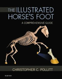 Illustrated Horse's Foot - E-Book