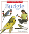 Looking After My Pet Budgie