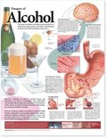 Dangers of Alcohol Anatomical Chart