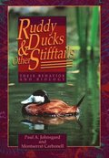 Ruddy Ducks and Other Stifftails