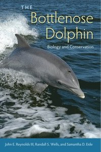 The Bottlenose Dolphin