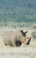 Alive! white rhino - Natural - Photo Art Notebooks (5 x 8 series)