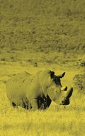 Alive! white rhino - Yellow duotone - Photo Art Notebooks (5 x 8 series)
