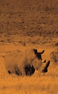 Alive! white rhino - Sepia - Photo Art Notebooks (5 x 8 series)