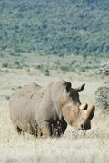 Alive! white rhino - Natural - Photo Art Notebooks (6 x 9 series)