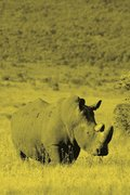 Alive! white rhino - Yellow duotone - Photo Art Notebooks (6 x 9 version)