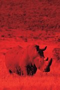 Alive! white rhino - Red duotone - Photo Art Notebooks (6 x 9 series)