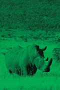 Alive! white rhino - Green duotone - Photo Art Notebooks (6 x 9 series)
