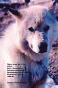 Husky Dogs and Views in the Nain-Nunatsiavut, Labrador Wilderness, Newfoundland and Labrador Province of Canada 1965-66: Cover Photograph: Husky Dog (