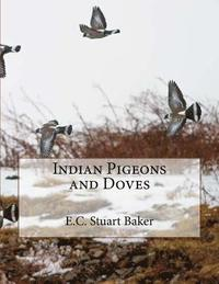 Indian Pigeons and Doves