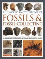 World Encyclopedia of Fossils &; Fossil-collecting