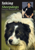 Talking Sheepdogs