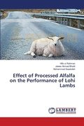Effect of Processed Alfalfa on the Performance of Lohi Lambs