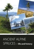 ANCIENT ALPINE SPRUCES - life and history